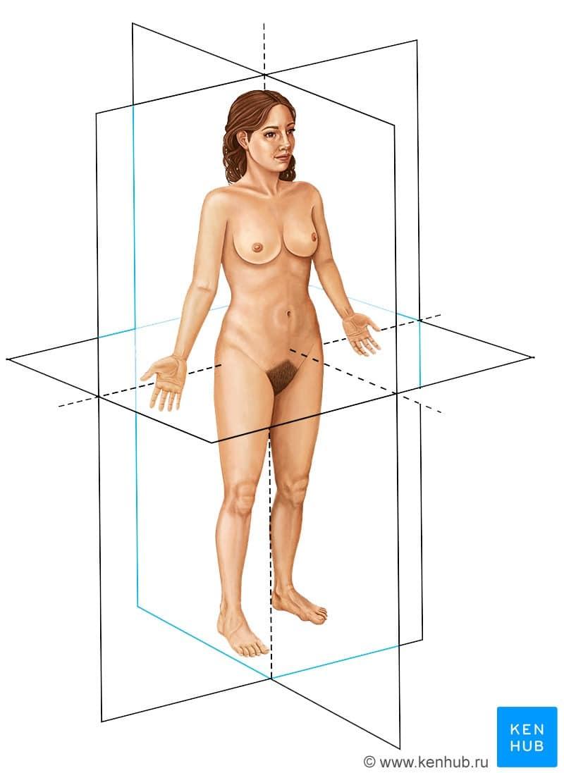 Оси и плоскости тела