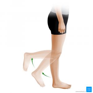 Сгибание ноги